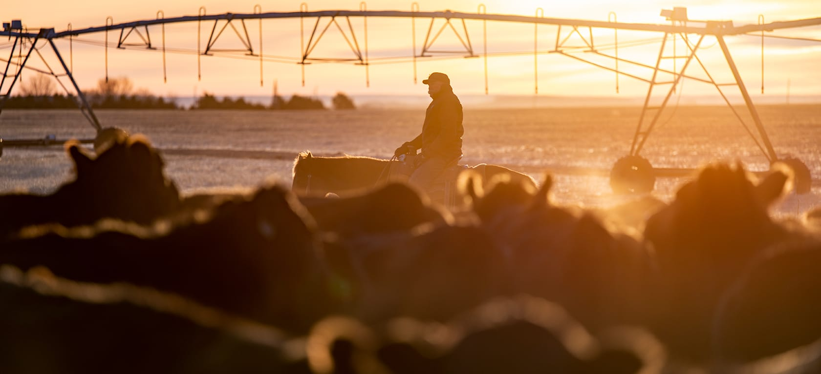 Checkoff Evaluation Committee | Beef Checkoff